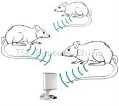 动物生理遥测系统