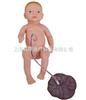 KAB/132高级新生儿脐带胎盘护理模型