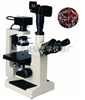Z便宜倒置生物显微镜XSP-18CE|倒置生物显微镜原理-绘统光学厂